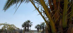 View inside Beersheba War Cemetery, Israel