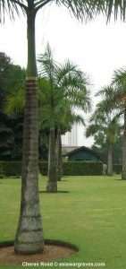 View inside Cheras Road War Cemetery, Malaysia