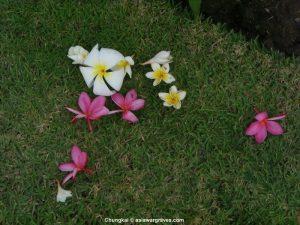 View inside Chungkai War Cemetery, Thailand
