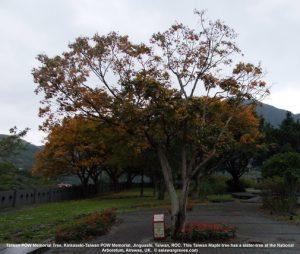 Taiwan POW Memorial Tree, Kinkaseki-Taiwan POW Memorial, Jinguashi, Taiwan, ROC © asiawargraves.com
