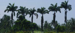 View inside Lae War Cemetery, Papua New Guinea