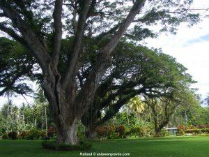View inside Rabaul War Cemetery, Papua New Guinea